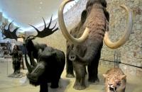 Musée de la préhistoire de Quinson Parc du Verdon